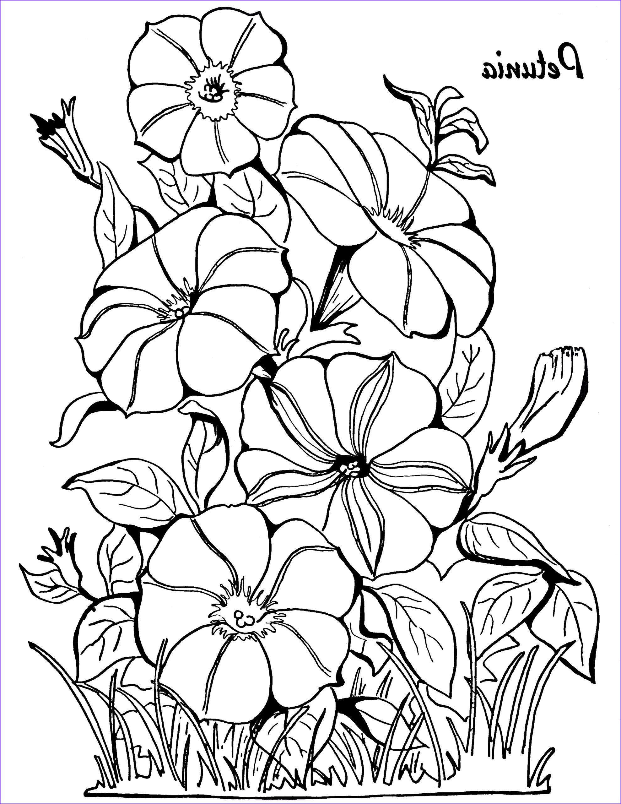 Flower Coloring Pages for Adults Best Of Images Adult Coloring Page Petunias the Graphics Fairy