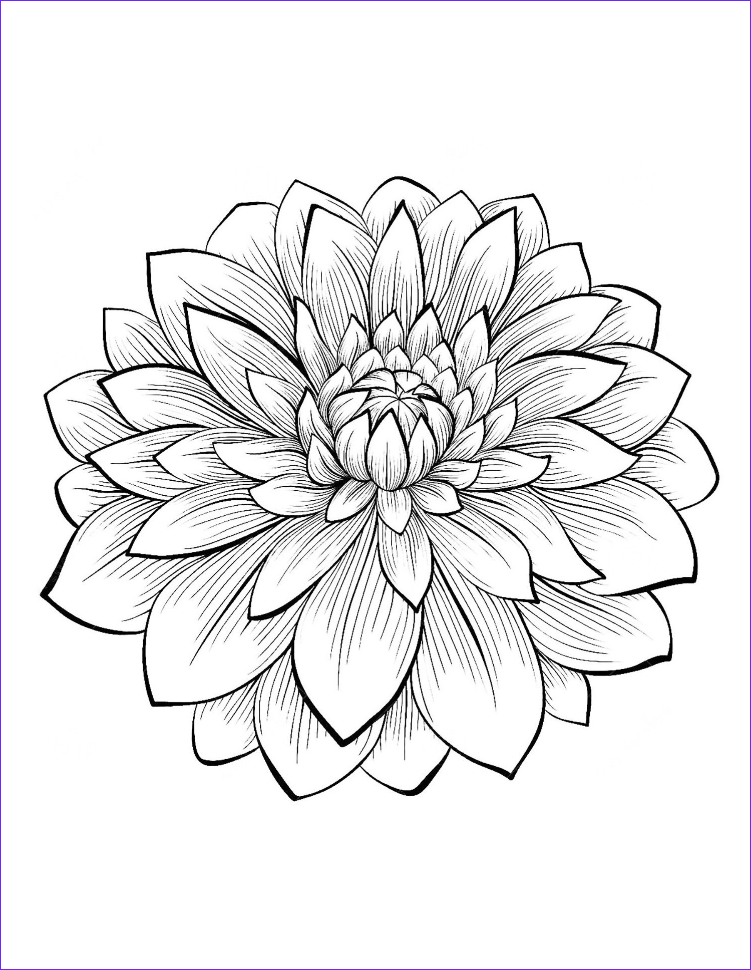 Flower Coloring Pages for Adults Inspirational Photos Dahlia Color One Of the Most Beautiful Flowers From the
