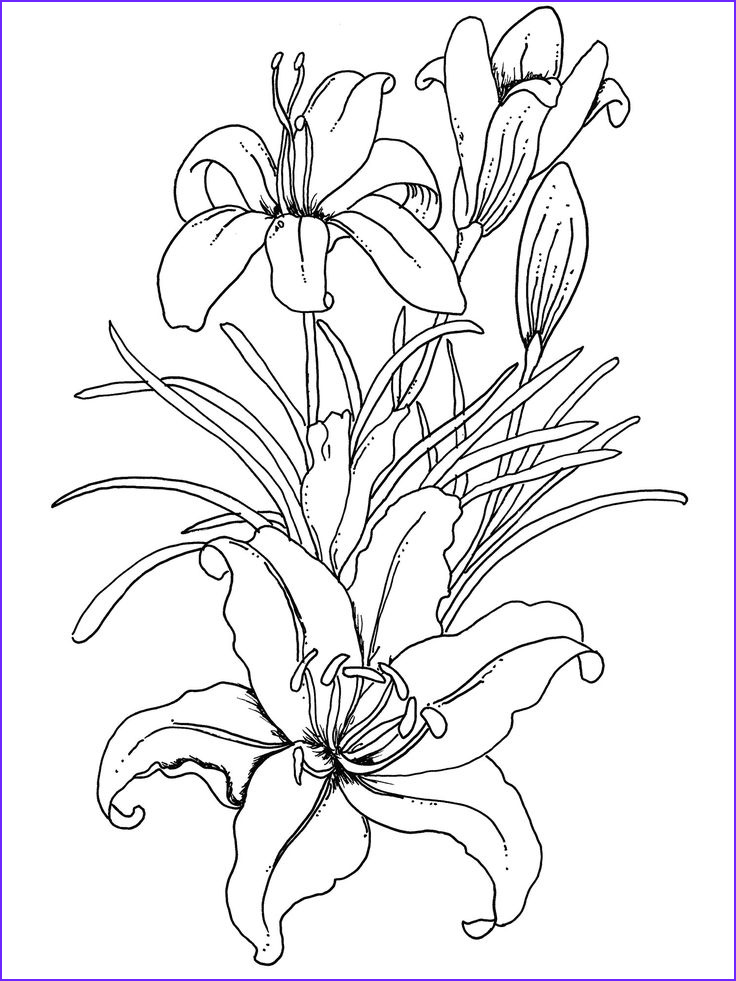 Flower Coloring Pages for Adults Luxury Photos Lilium Flower Coloring Pages for Adults Coloring Pages