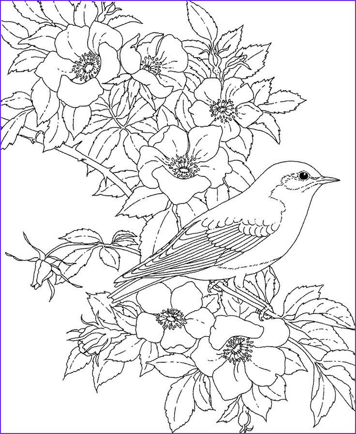 Flower Coloring Pages for Adults New Photos Nice Blue Bird Coloring Page Special Picture