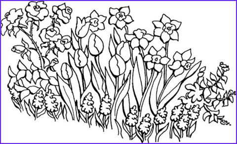 Flower Garden Coloring Pages Beautiful Stock Flowers In the Garden Coloring Page