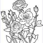 Flower Garden Coloring Pages New Gallery Flower Coloring Worksheet