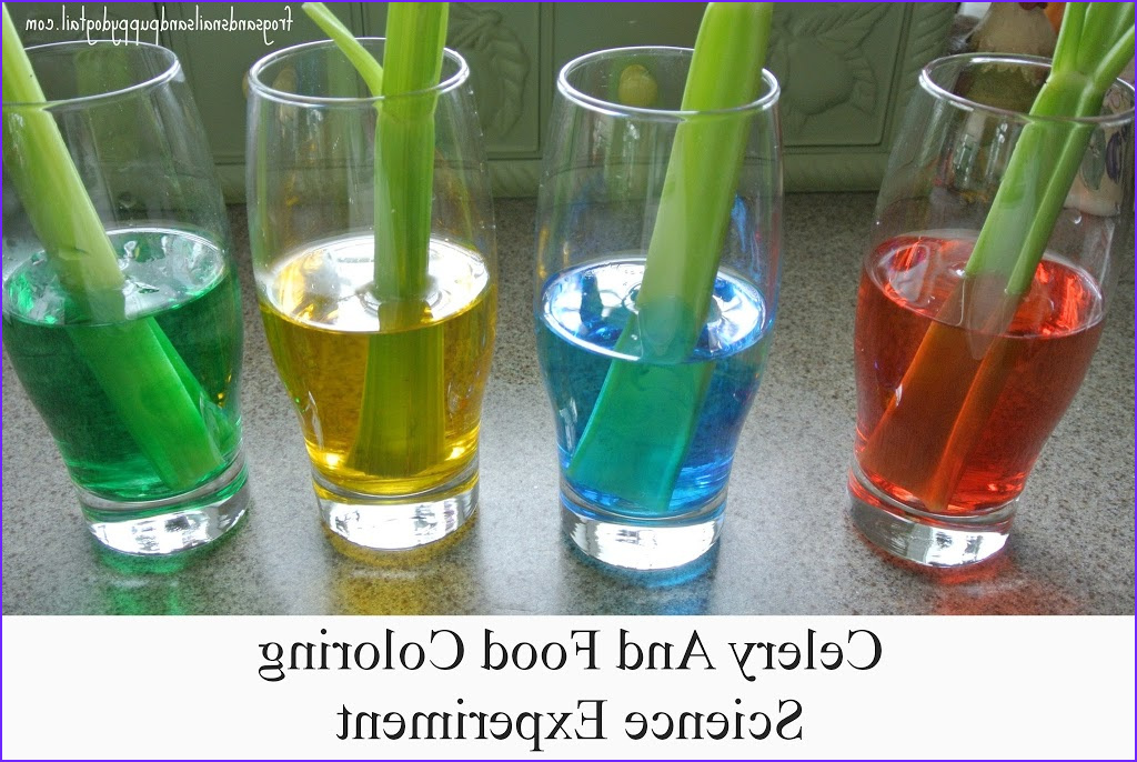celery and food coloring science experiment