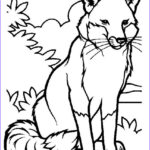 Fox Coloring Sheet Beautiful Gallery Free Printable Fox Coloring Pages For Kids