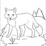 Fox Coloring Sheet Inspirational Photography Free Printable Fox Coloring Pages For Kids