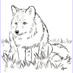 Fox Coloring Sheet New Images Free Coloring Pages And Reference Art Starts
