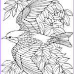 Free Bird Coloring Pages New Collection Printable Advanced Bird Coloring Pages For Adults Free