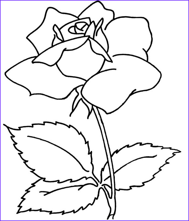 Free Coloring Pages for Adults Flowers Awesome Photos Flowers Coloring Pages Spray Flower Coloring Sheets for