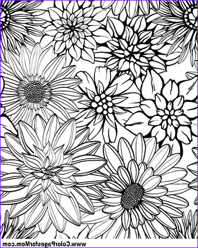 Free Coloring Pages for Adults Flowers Beautiful Gallery Advanced Coloring Pages Flower Coloring Page 79