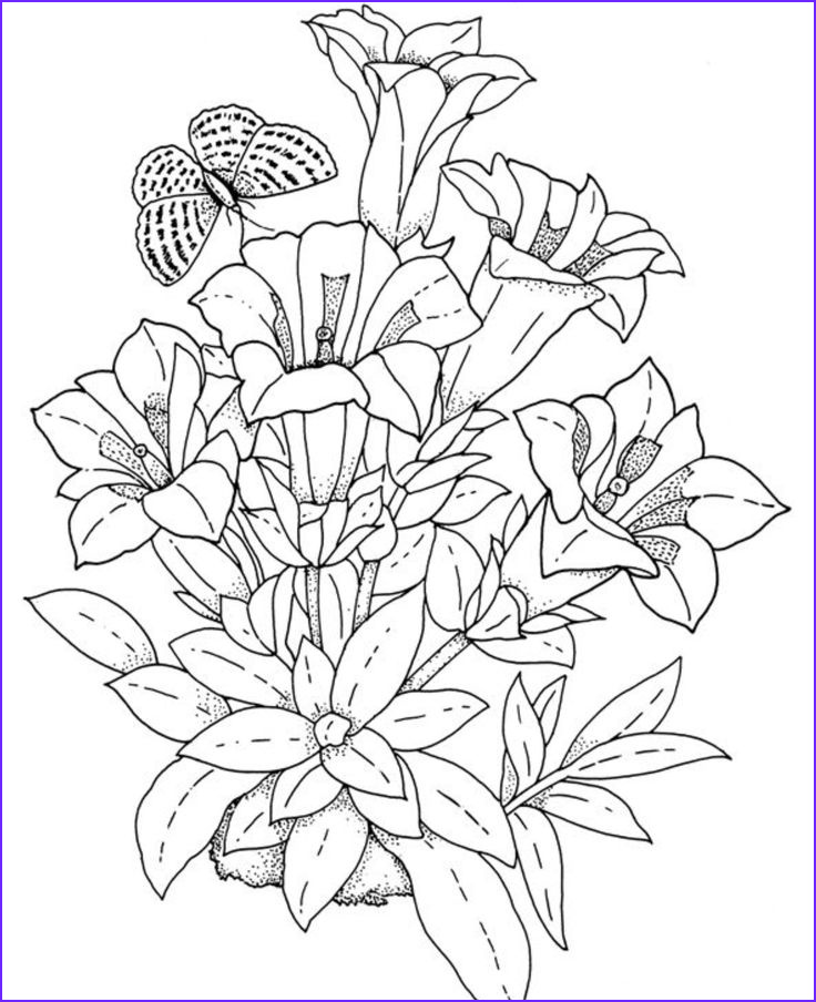 Free Coloring Pages for Adults Flowers Beautiful Stock 17 Best Images About Dessin De Fleurs On Pinterest