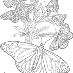 Free Mandala Coloring Pages For Adults Beautiful Photos Free Butterfly Mandala Coloring Pages Coloring Home