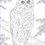 Free Owl Coloring Pages Luxury Collection Northern Spotted Owl Coloring Page