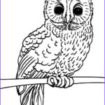 Free Owl Coloring Pages Unique Photos Free Printable Owl Coloring Pages For Kids
