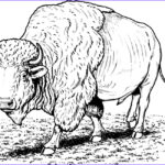 Free Printable Coloring Pages Best Of Photos Free Printable Bison Coloring Pages For Kids