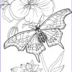 Free Printable Coloring Pages For Adults Only Best Of Photography Butterfly Standing Blooming Plants Coloring Page