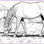 Free Printable Horse Coloring Pages Elegant Images Free Horse Coloring Pages