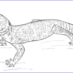 Gecko Coloring Pages Beautiful Photography How to Draw A Leopard Gecko