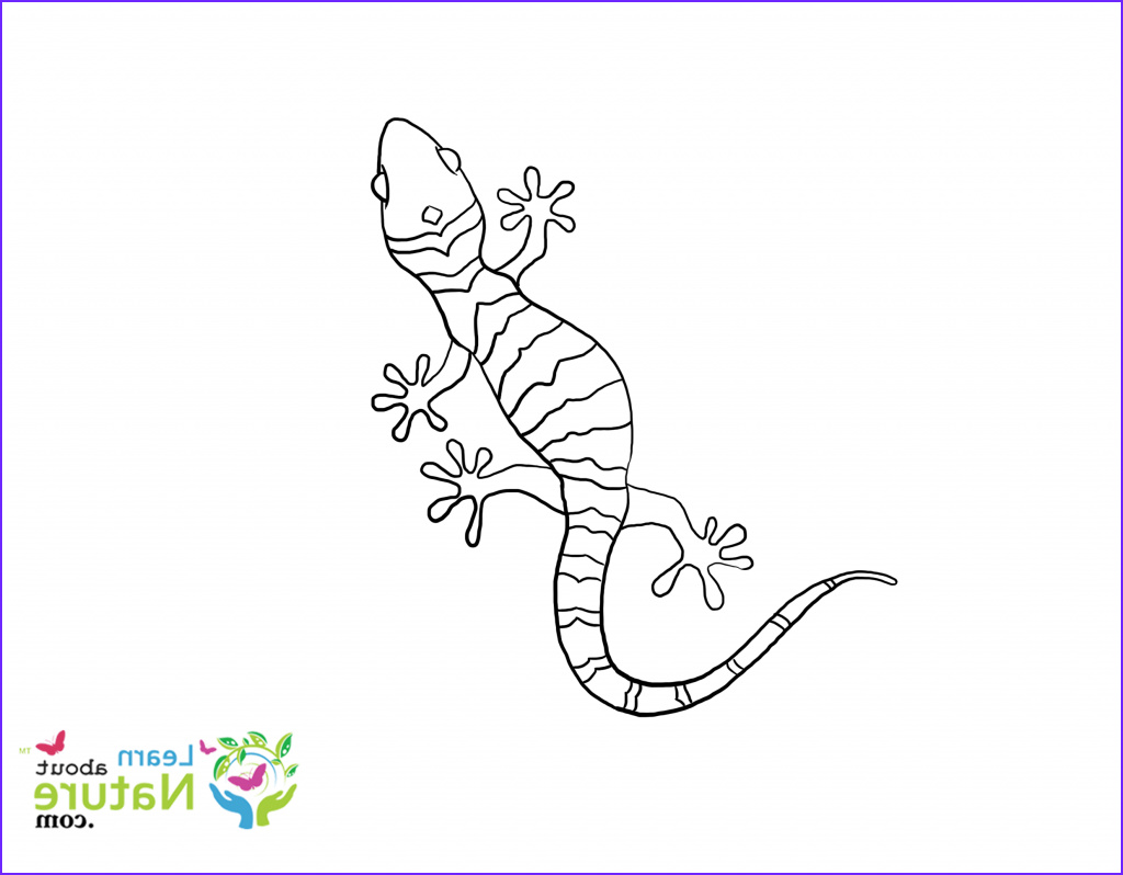 Gecko Coloring Pages Elegant Images Gecko Coloring Page Learn About Nature