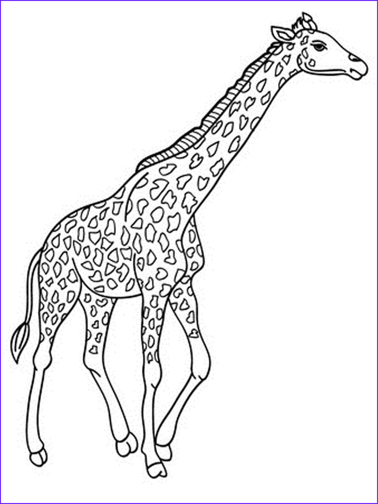giraffe coloring pages realistic