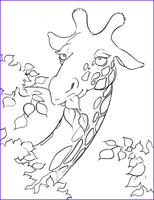 giraffe coloring pages animal pictures