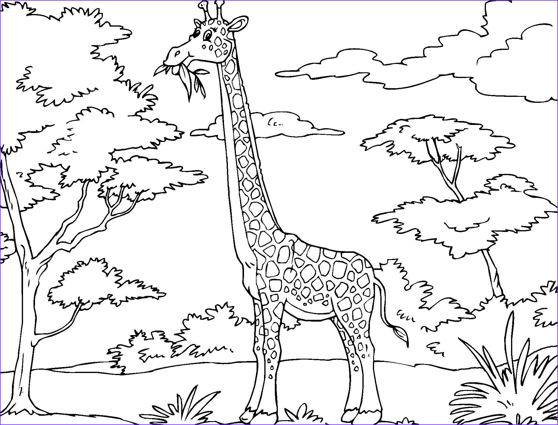 Giraffe Coloring Book Luxury Stock Printable Giraffe Coloring Pages