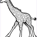 Giraffe Coloring Page Cool Collection Free Printable Giraffe Coloring Pages For Kids