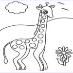 Giraffe Coloring Page Luxury Stock Giraffe Descprition And Facts