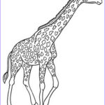 Giraffe Coloring Page New Collection Baby Giraffe Coloring Pages