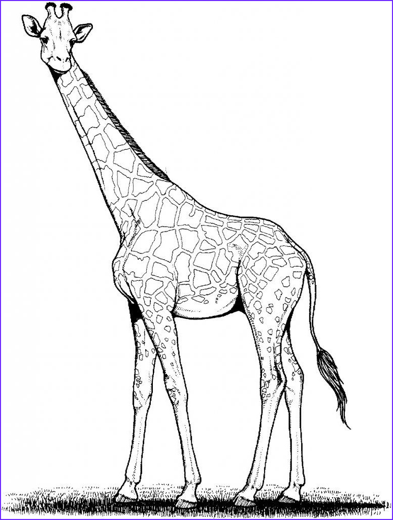 Giraffe Coloring Pictures Awesome Photos Free Printable Giraffe Coloring Pages for Kids