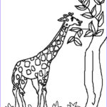 Giraffes Coloring Pages Beautiful Gallery Draw Samples G For Giraffe Coloring Page Easy Drawing