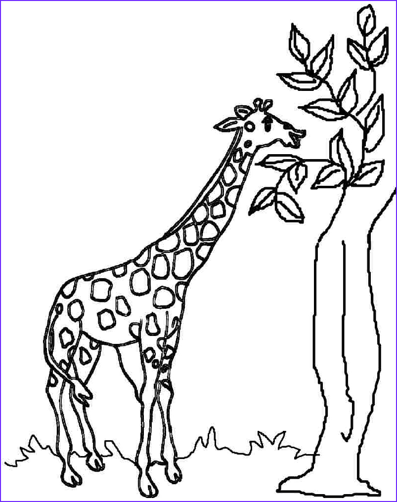 g for giraffe coloring page easy drawing
