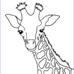 Giraffes Coloring Pages Beautiful Images Baby Giraffe Coloring Page Art Starts For Kids