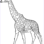 Giraffes Coloring Pages Beautiful Stock Realistic Giraffe Coloring Page
