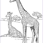 Giraffes Coloring Pages Best Of Photos Giraffe Coloring Pages For Kids To Have Fun – Best Apps