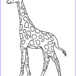 Giraffes Coloring Pages Best Of Photos Kids N Fun