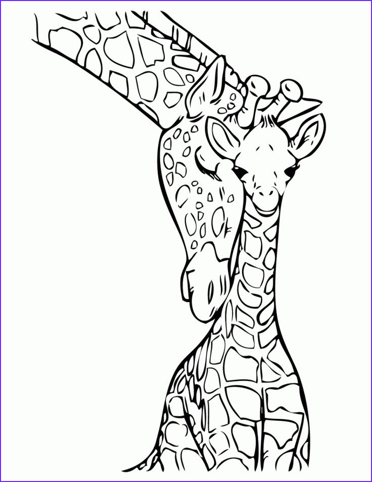 Giraffes Coloring Pages Luxury Photography Best 25 Giraffe Coloring Pages Ideas On Pinterest