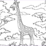 Giraffes Coloring Pages Luxury Photos Printable Giraffe Coloring Pages