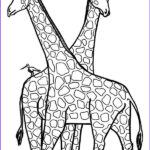 Giraffes Coloring Pages Unique Photos 9 Giraffe Coloring Pages Free Psd Pdf Jpg format