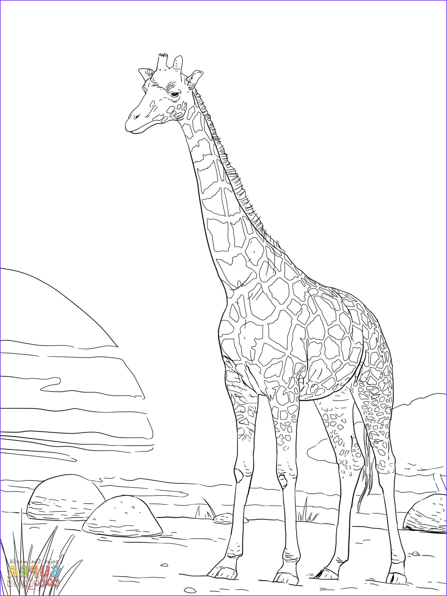 Giraffes Coloring Pages Unique Photos Rothschild Giraffe Coloring Page