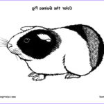 Guinea Pig Coloring Page Beautiful Image Guinea Pig Coloring