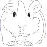 Guinea Pig Coloring Page Best Of Gallery Groaning Guinea Pig Coloring Pages