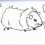 Guinea Pig Coloring Page Best Of Photography Guinea Pig Coloring Pages – Coloring Pages