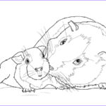 Guinea Pig Coloring Page Luxury Stock Guinea Pig Mother And Baby Coloring Page