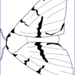 Gypsy Coloring Pages Luxury Images Gypsy Moth Coloring Page Audio Stories For Kids