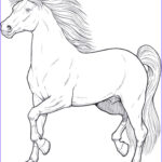 Horse Coloring Book For Adults Best Of Photography Horses 1 Adult Coloring Pages