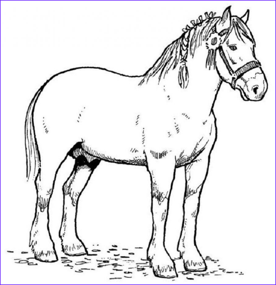 Horse Coloring Book for Adults Cool Image Horse Coloring Pages