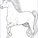 Horse Coloring Pages For Adults Best Of Images 161 Best Images About Horse Drawings On Pinterest