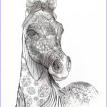 Horse Coloring Pages For Adults Cool Stock Adult Coloring Book Page Beautiful Stallion For Adult