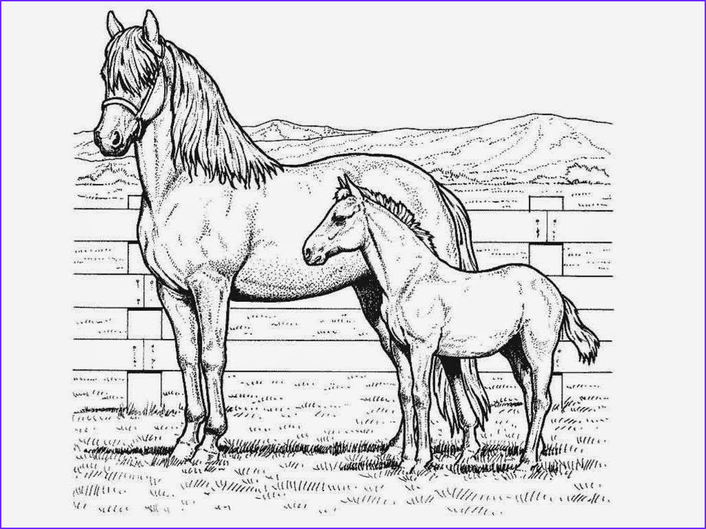 Horse Coloring Pages Inspirational Stock Great Horse Coloring Pages Line