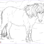 Horse Coloring Pages Printable Elegant Collection Icelandic Horse Coloring Page